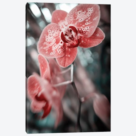 Flower XLV 3-Piece Canvas #GLM86} by Glauco Meneghelli Art Print