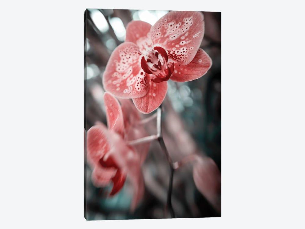 Flower XLV by Glauco Meneghelli 1-piece Canvas Print