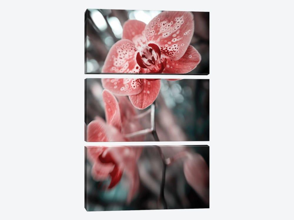 Flower XLV by Glauco Meneghelli 3-piece Canvas Print