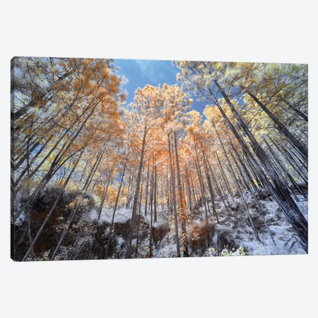 High Trees - Sao Paulo, Brazil Canvas Print #GLM89} by Glauco Meneghelli Canvas Art