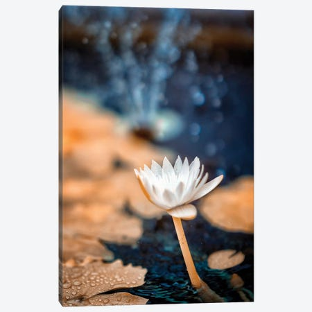 Infrared Flower Canvas Print #GLM90} by Glauco Meneghelli Art Print
