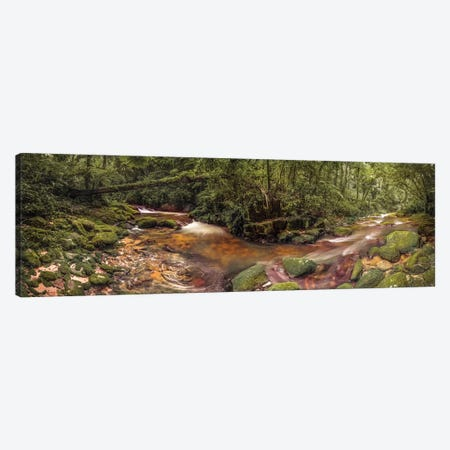 Inside Forest Pano - Sao Paulo, Brazil Canvas Print #GLM91} by Glauco Meneghelli Art Print