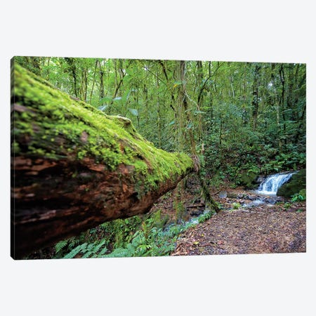 Into the Forest Canvas Print #GLM93} by Glauco Meneghelli Art Print