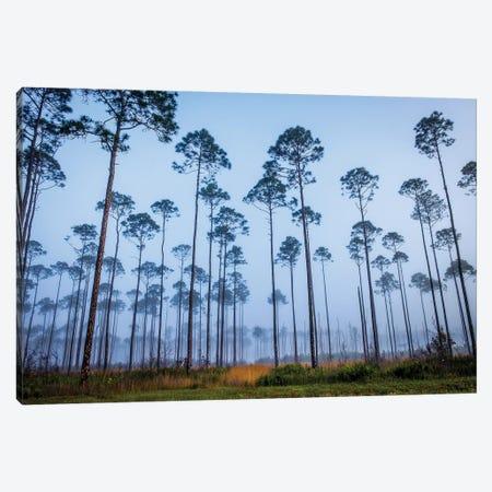 Piney Woods Canvas Print #GLT11} by Glenn Taylor Canvas Artwork