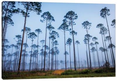 Piney Woods Canvas Art Print