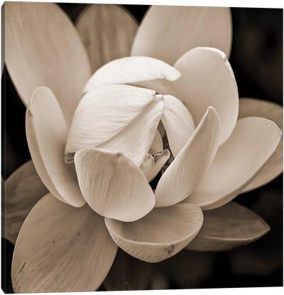 Sepia Lily I Canvas Art Print