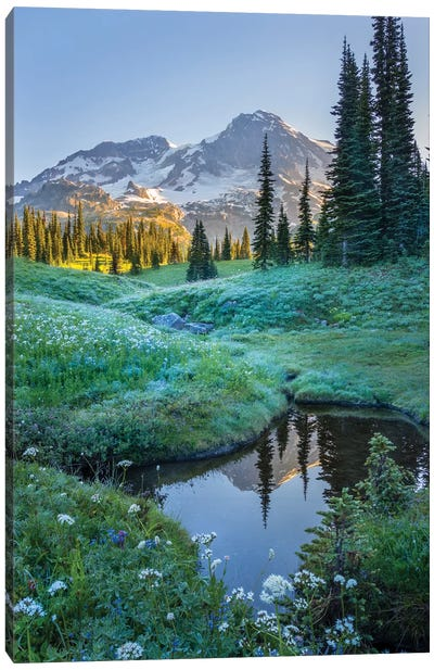 USA. Washington State. Mt. Rainier reflected in tarn amid wildflowers, Mt. Rainier National Park I Canvas Art Print