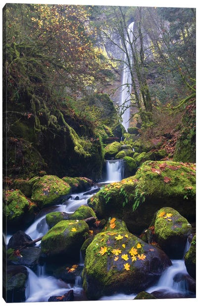 USA, Oregon. Autumn view of McCord Creek flowing below Elowah Falls in the Columbia River Gorge. Canvas Art Print