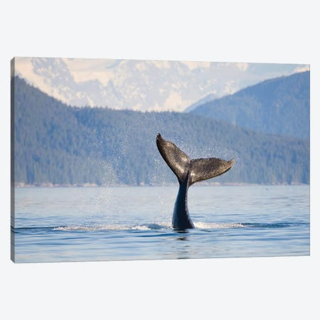 Humpback Whale Calf's Tail, Icy Strait, Alaska, USA Canvas Print #GLU1} by Gary Luhm Canvas Wall Art