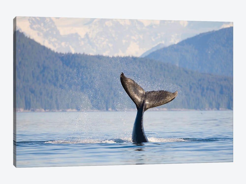 Humpback Whale Calf's Tail, Icy Strait, Alaska, USA by Gary Luhm 1-piece Canvas Art Print