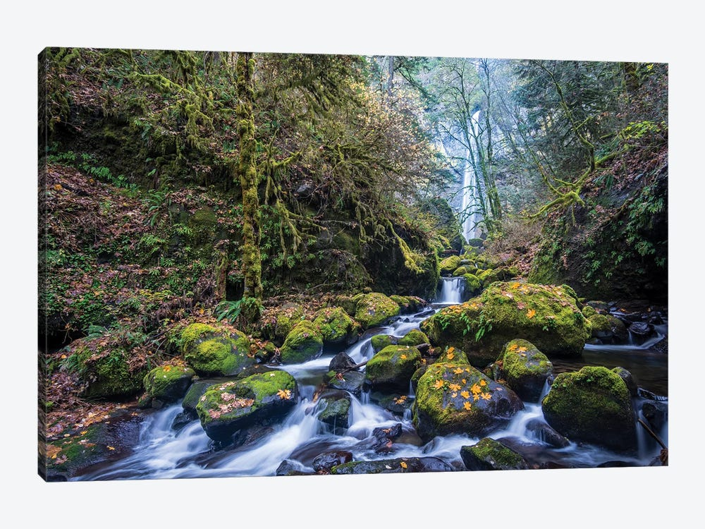 USA, Oregon. Autumn view of McCord Creek flowing below Elowah Falls in the Columbia River Gorge. by Gary Luhm 1-piece Art Print