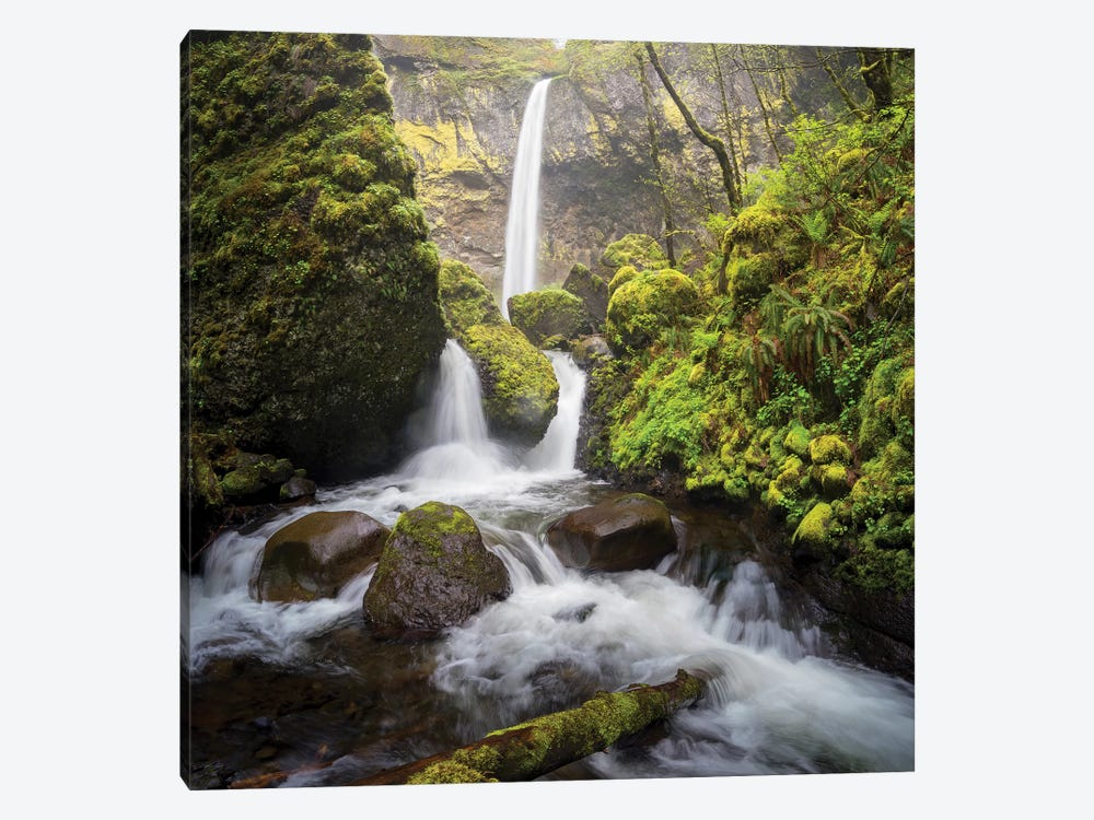 USA, Oregon. Spring view of McCord Creek flowing below Elowah Falls in the Columbia River Gorge. by Gary Luhm 1-piece Canvas Wall Art