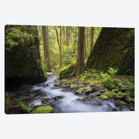 USA, Oregon. Spring view of Ruckle Creek in the Columbia River Gorge. Canvas Print #GLU22} by Gary Luhm Canvas Artwork