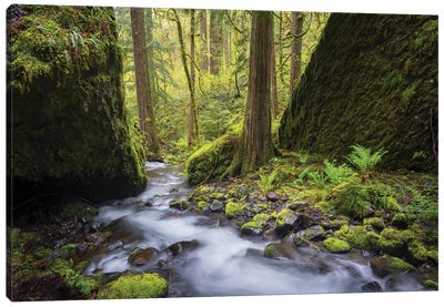 USA, Oregon. Spring view of Ruckle Creek in the Columbia River Gorge. Canvas Art Print