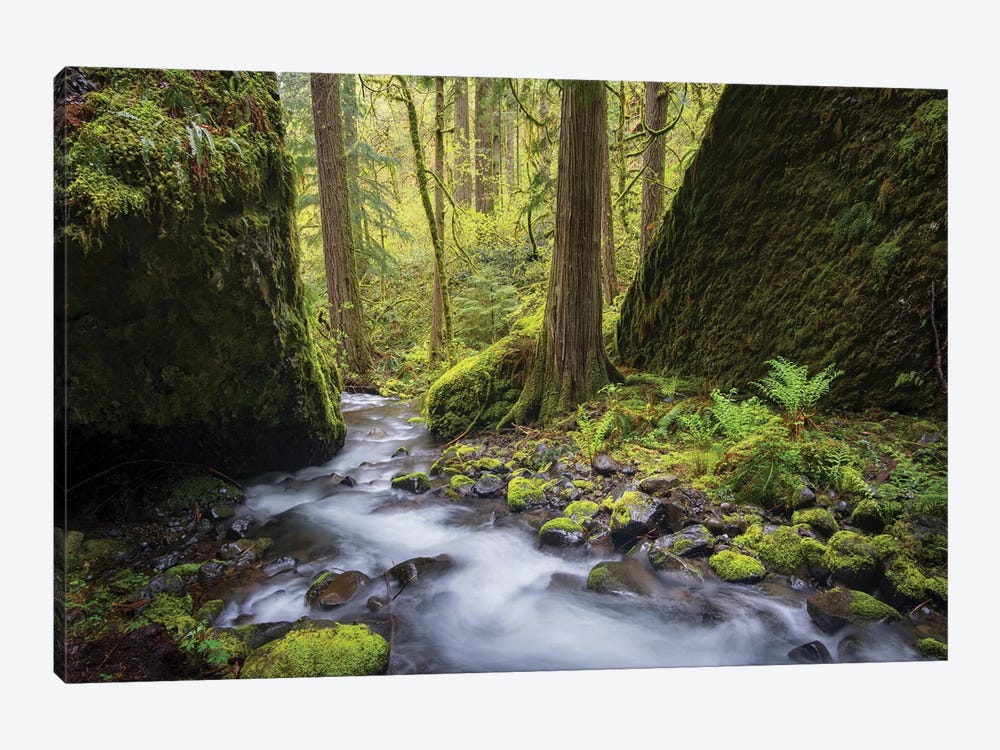 USA, Oregon. Spring view of Ruckle Creek in the Columbia River Gorge. by Gary Luhm 1-piece Canvas Print