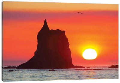 Sea Stack With A Setting Sun In The Background, Toleak Point, Olympic National Park, Washington, USA Canvas Art Print