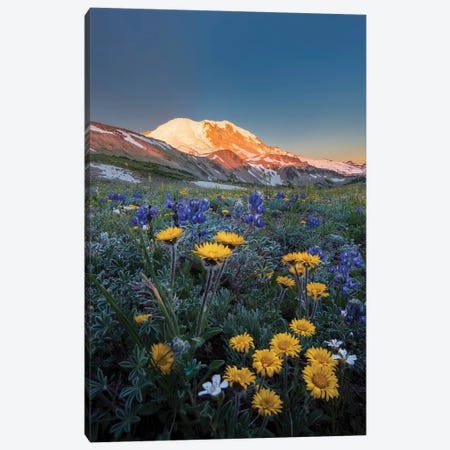 WA. Alpine wildflowers Dwarf Lupine, Tolmie's Saxifrage and Alpine Golden Daisy Canvas Print #GLU34} by Gary Luhm Canvas Art
