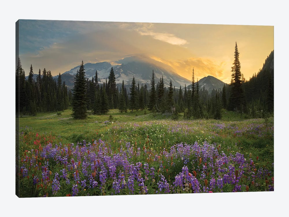 Mountainside Landscaper, Indian Henry's Hunting Ground, Mount Rainier National Park, Washington, USA by Gary Luhm 1-piece Canvas Art