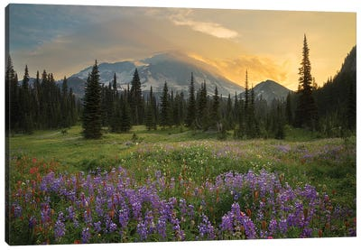 Mountainside Landscaper, Indian Henry's Hunting Ground, Mount Rainier National Park, Washington, USA Canvas Art Print