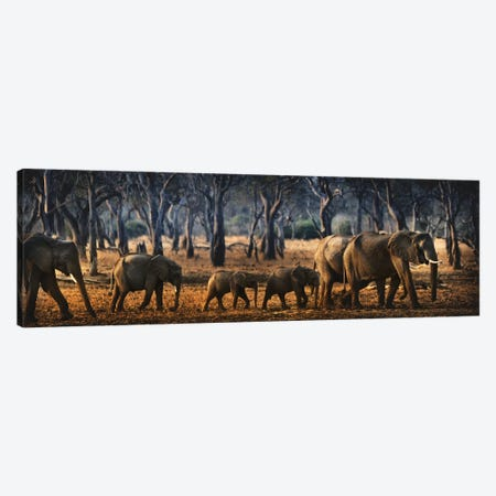 Untitled Canvas Print #GMB4} by Antonio Grambone Canvas Artwork