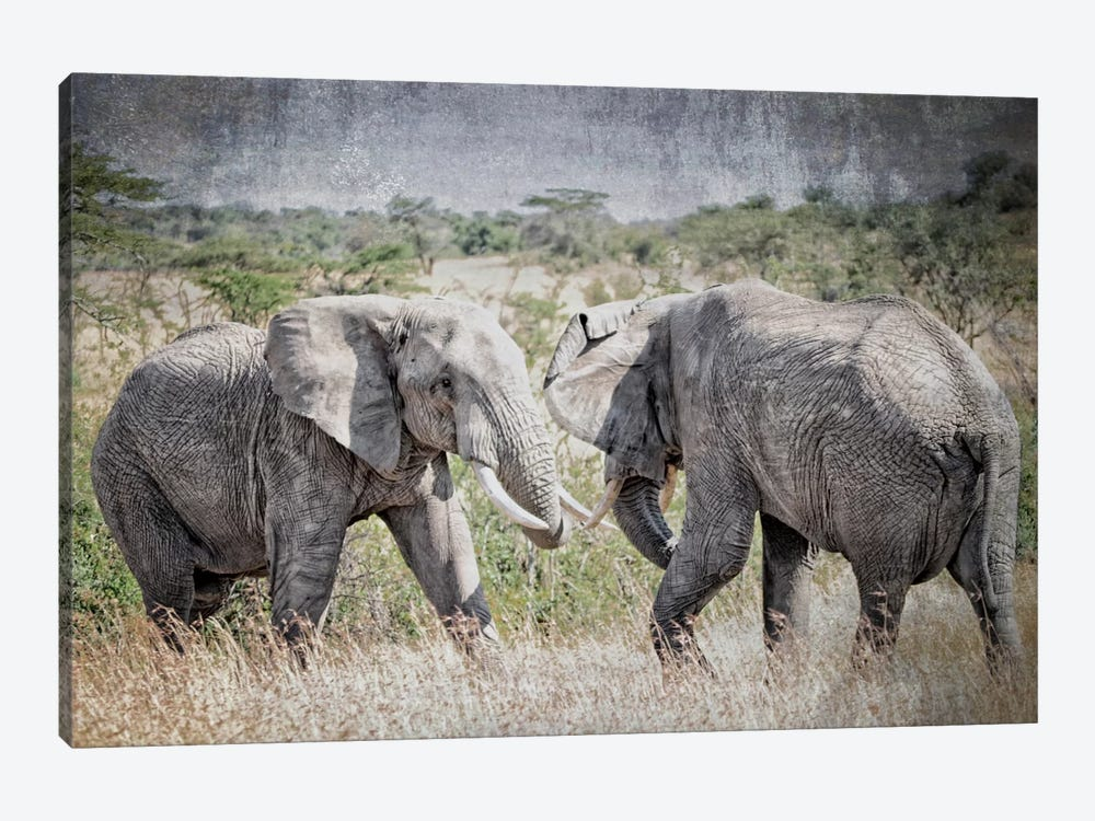 African Plains XI by Golie Miamee 1-piece Canvas Art