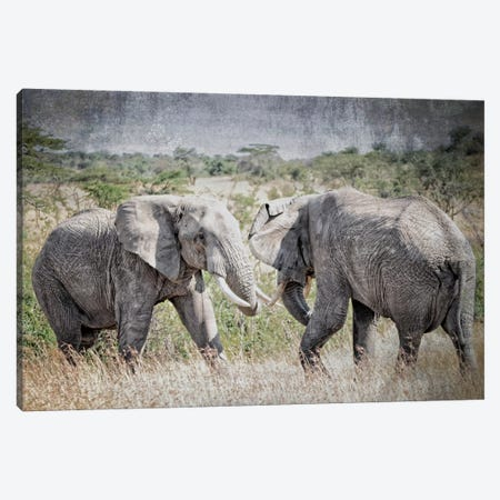 African Plains XI Canvas Print #GMI11} by Golie Miamee Canvas Artwork