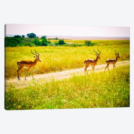 African Plains I Canvas Print #GMI1} by Golie Miamee Canvas Wall Art