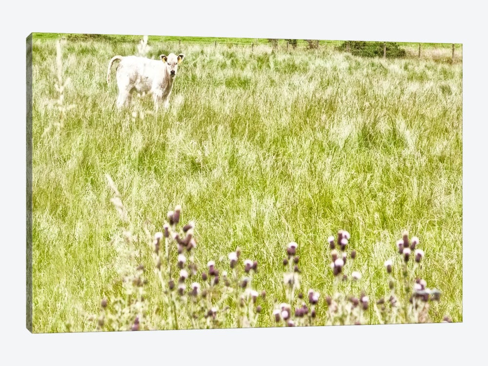 Bucolic Scene XI by Golie Miamee 1-piece Canvas Artwork