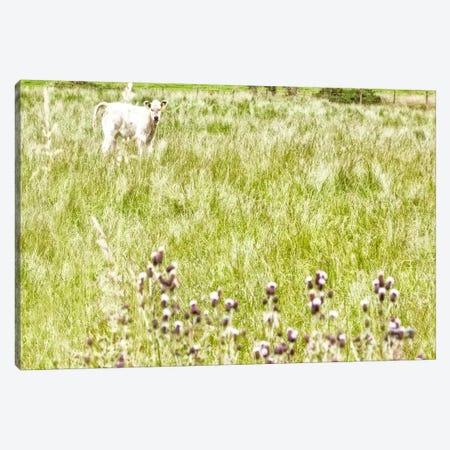 Bucolic Scene XI Canvas Print #GMI20} by Golie Miamee Canvas Art Print
