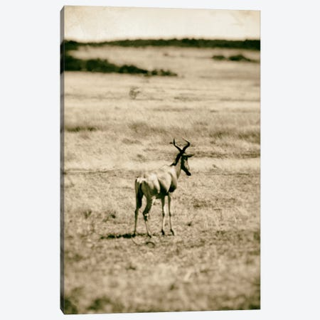 African Plains II Canvas Print #GMI2} by Golie Miamee Canvas Art