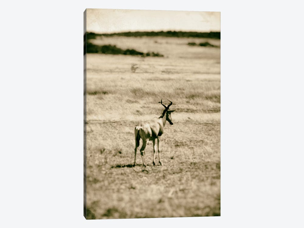 African Plains II by Golie Miamee 1-piece Canvas Print