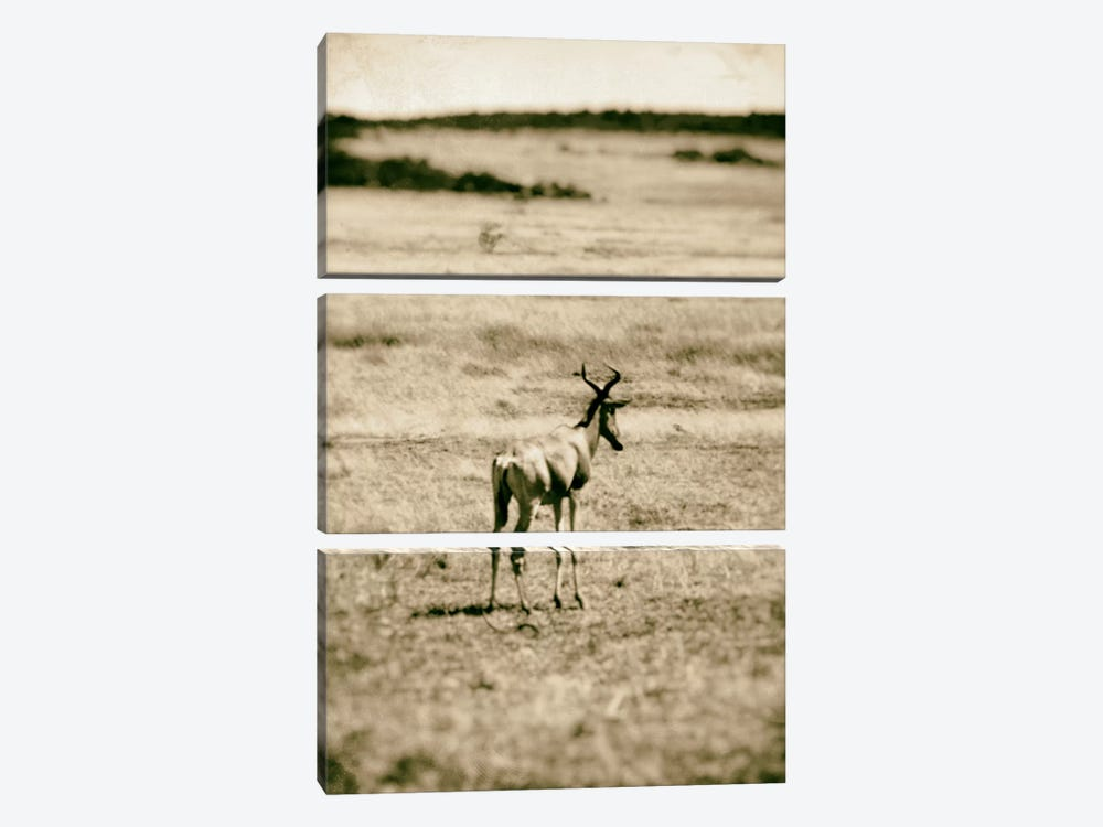 African Plains II by Golie Miamee 3-piece Canvas Print
