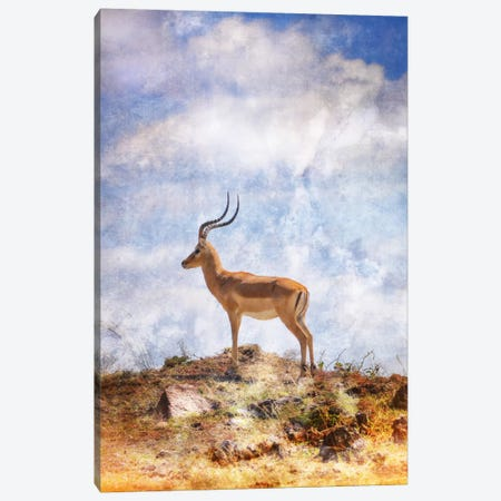 African Plains III Canvas Print #GMI3} by Golie Miamee Canvas Art