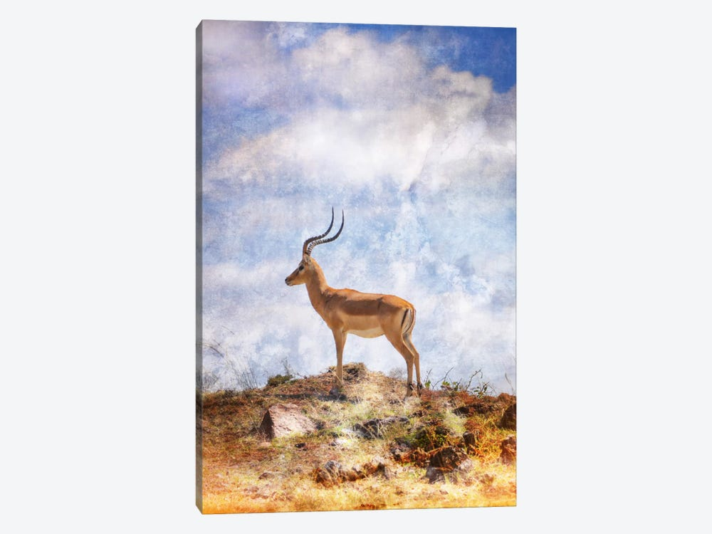 African Plains III by Golie Miamee 1-piece Canvas Artwork
