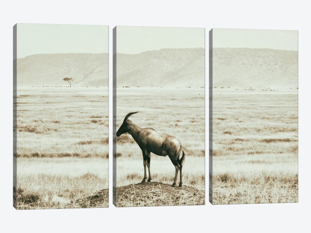 African Plains IV by Golie Miamee 3-piece Art Print