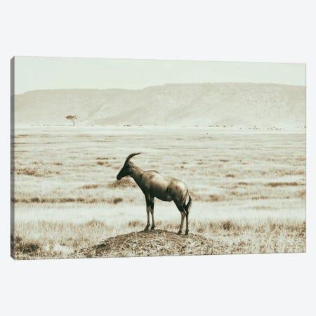 African Plains IV Canvas Print #GMI4} by Golie Miamee Art Print