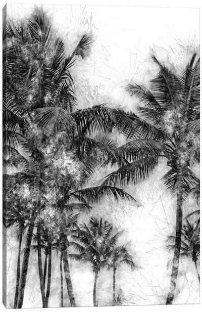 Dorado Palms Canvas Art Print