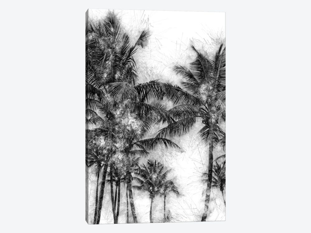 Dorado Palms by Golie Miamee 1-piece Canvas Wall Art