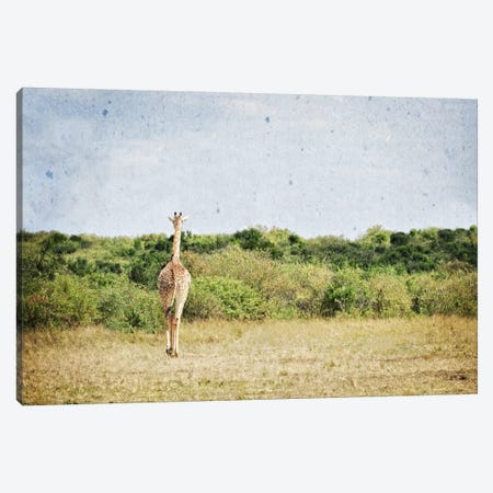 African Plains V Canvas Print #GMI5} by Golie Miamee Art Print