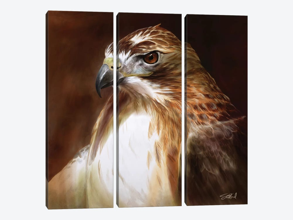Red Tailed Hawk Portrait by Steve Goad 3-piece Canvas Artwork