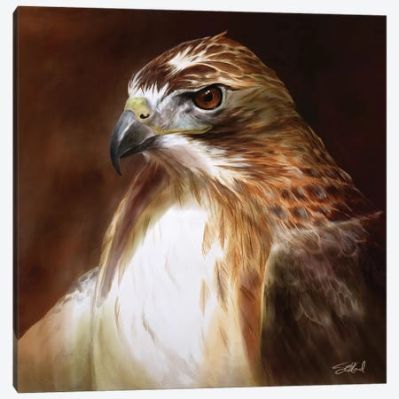 Red Tailed Hawk Portrait Canvas Print #GOA21} by Steve Goad Canvas Wall Art