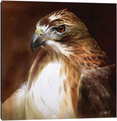 Red Tailed Hawk Portrait Canvas Art Print