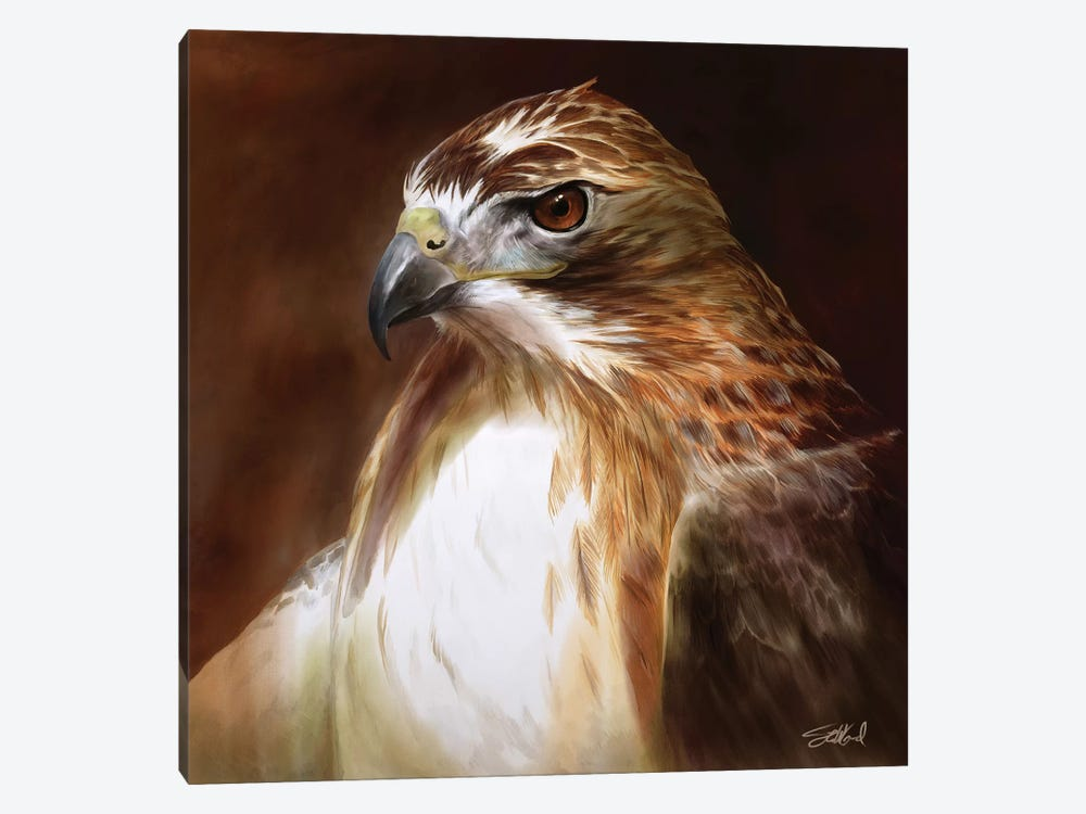 Red Tailed Hawk Portrait by Steve Goad 1-piece Canvas Wall Art