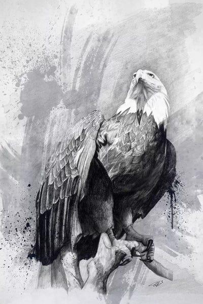 bald eagle drawing art print by steve goad icanvas