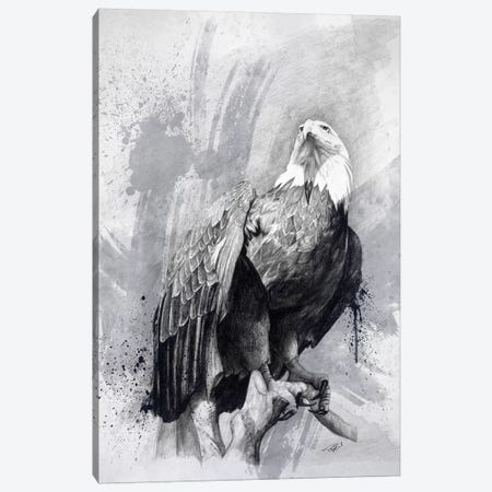 Bald Eagle Drawing Canvas Print #GOA3} by Steve Goad Canvas Wall Art