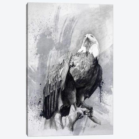 Bald Eagle Drawing Canvas Print #GOA3} by Steve Goad Canvas Wall Art