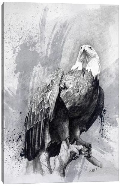 Bald Eagle Drawing Canvas Art Print