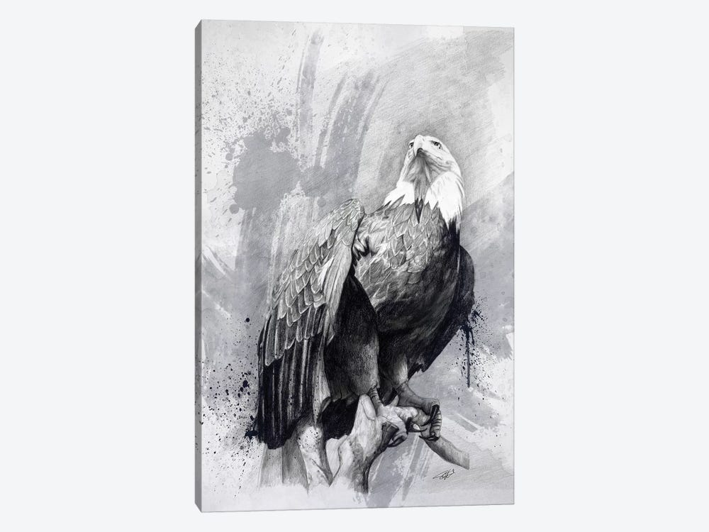 Bald Eagle Drawing by Steve Goad 1-piece Canvas Print