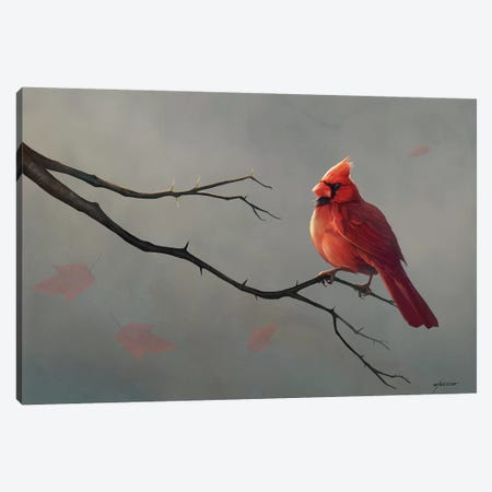 Male Cardinal Canvas Print #GOA55} by Steve Goad Canvas Artwork