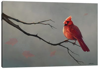 Male Cardinal Canvas Art Print